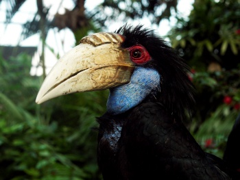 Cheap Bali Birds And Reptile Park Ubud Tours Ticket Prices 2019